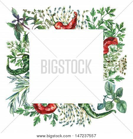 Watercolor herbs and spices frame. Square frame with hand painted food objects: basil, rosemary, parsley, oregano, thyme, dill, knot-grass, green and red pepper on white background.