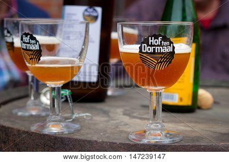 BELGIUM, TILDONK - SEPTEMBER 04, 2014: Glass of the Hof ten Dormaal beer in the family brewery in Belgium. Flanders.