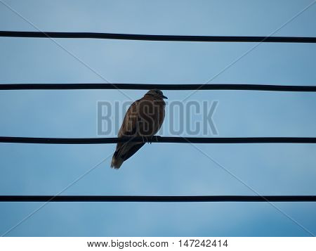 birds sitting on wire. soft focus, silhouette tone