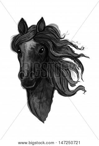 Black noble raven mustang portrait. Horse stallion with wavy mane strands looking straight forward