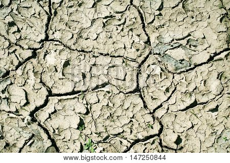 Dry soil with cracked waterless surface texture of grey earth on natural background