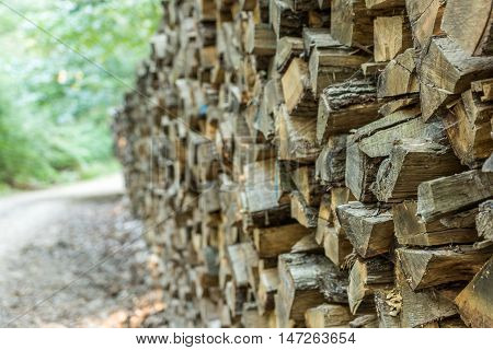 Many wedges of firewood stacked in forest