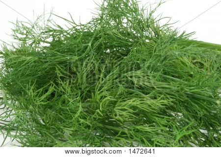 Dill, A Herb