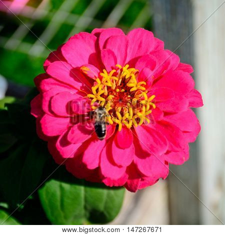 Colorful Flower In Full Boom