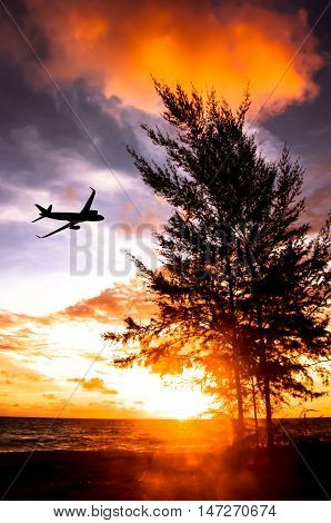 silhouette of plane fly in sky over pine tree sea sunset and becoming to twilight period
