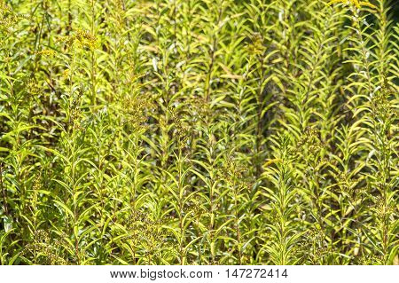 aa full frame natural green leaves background