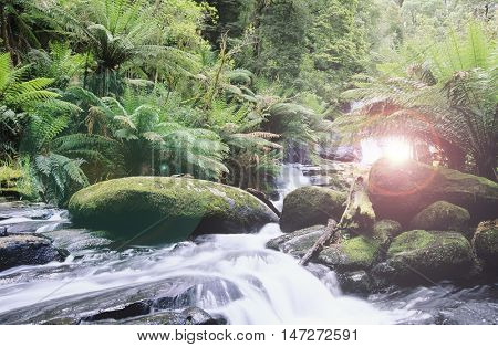 Lens flare by stream in woods