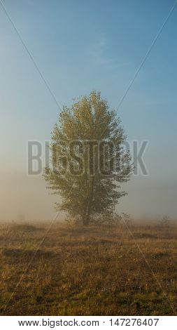 vertical panoramic photo autumn tree on the meadow in a fog sunny day