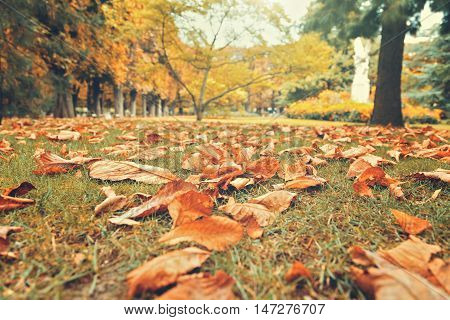 Autumn leaves on grass in Luxembourg Gardens Paris France. Fall background