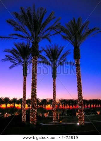 Palm Trees At Christmas