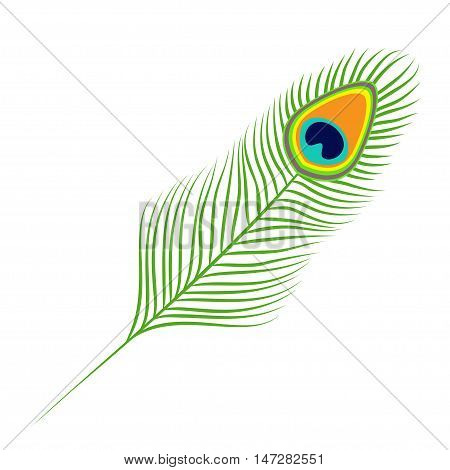 Peacock feather. Exotic tropical bird colorful tail. Isolated. White background. Flat design. Vector illustration