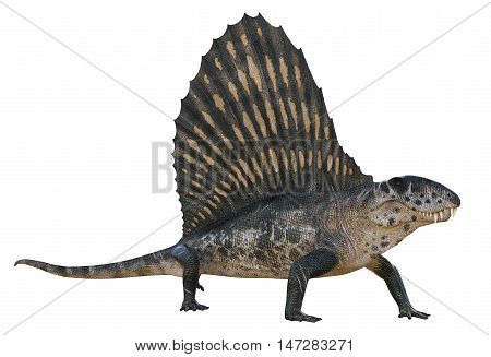 3D rendering of Dimetrodon looking for food, isolated on white background.
