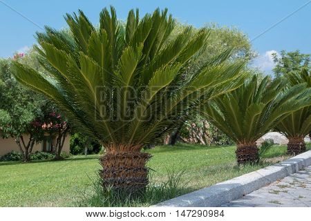 Small Palm Tree In Line