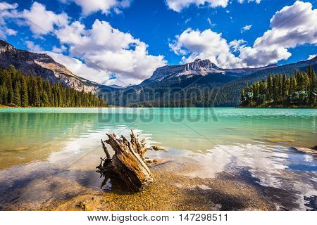Mountain Emerald lake in the wooded mountains. Sunny day in autumn. The concept of eco-tourism and active recreation. Yoho National Park in Canada