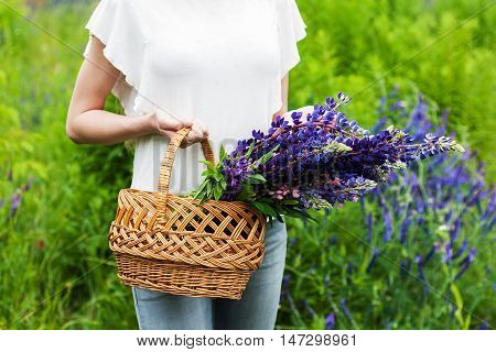 Bouquet Of Lupine