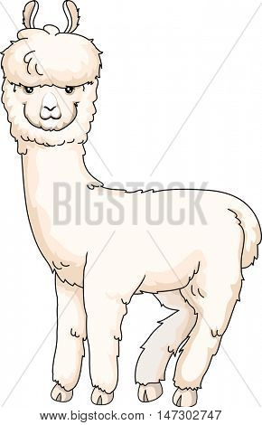 Animal Illustration of a Cute Furry Alpaca with Thick White Coat Looking Back
