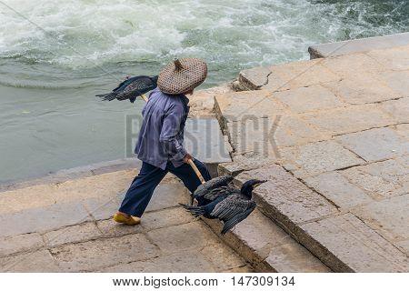 Yangshuo China - October 20 2013: Cormorant fisherman goes to his ancient bamboo raft on the Li River in Yangshuo Guangxi China.