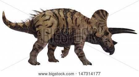 3D rendering of Triceratops horridus walking, isolated on white background.