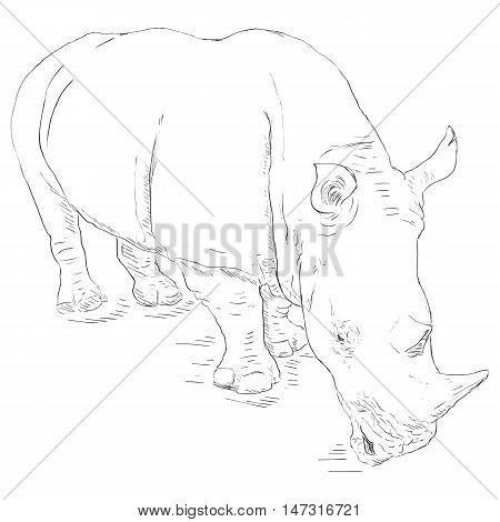 Vector Single Sketch Rhinoceros