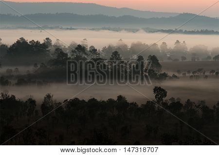 Fog covering the mountain forests on the morning