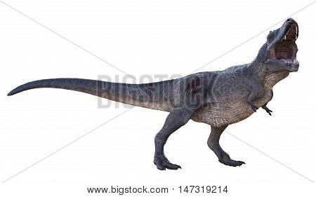 3D rendering of Tyrannosaurus Rex roaring, isolated on white background.