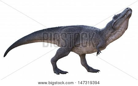 3D rendering of Tyrannosaurus Rex smelling for dead animals, isolated on white background.