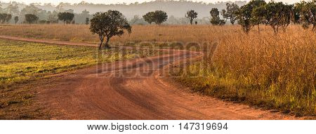 S-curve in dirt road in savanna forest