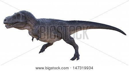 3D rendering of Tyrannosaurus Rex running, isolated on white background.