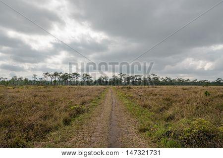 Dry savanna field landscape on cloudy day