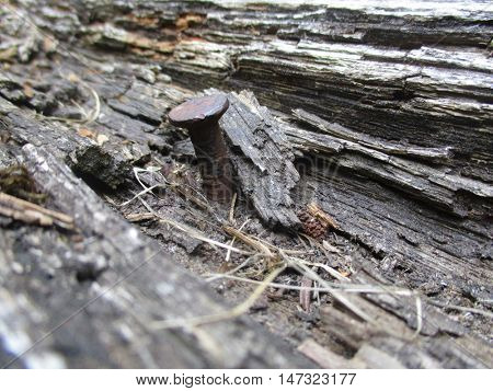 close up of an old nail in the wood