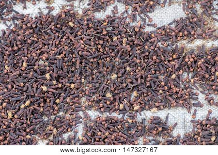 Cloves Scattered To Dry To Sun Rays In Indonesia