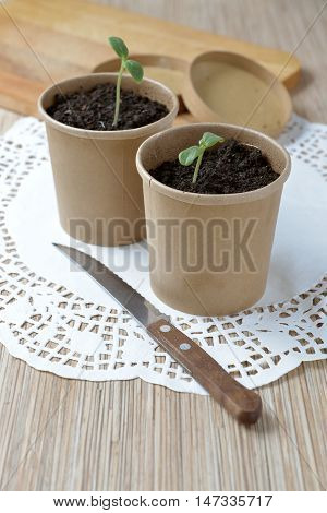 paper cups with seedlings on the table beautiful picture