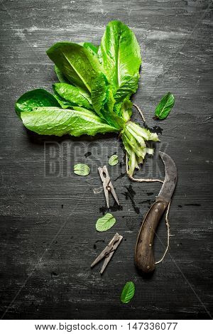 Bunch of fresh sorrel with clothespins. On the black wooden table.