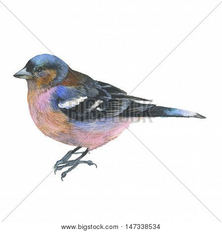 Sky bird sparrow in a wildlife by watercolor style isolated. Wild freedom, bird with a flying wings. Aquarelle bird could be used for background, texture, pattern, frame, border or tattoo.
