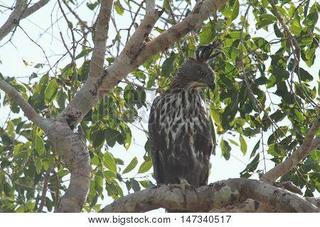 Sri lankan bird in tha yala national animal's park