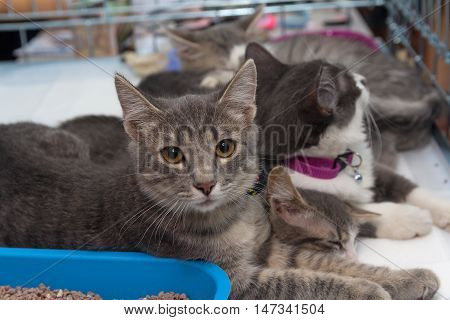 Homeless kittens in a cage at the shelter. Pets