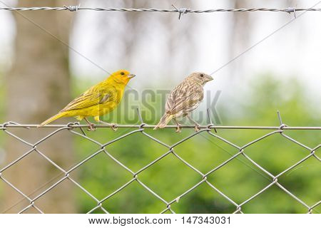 Two birds over resting over an iron fence