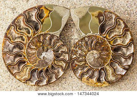 Spiral Ammonite Fossil On Sand Closeup Background