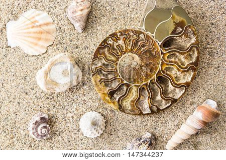 Spiral Ammonite Fossil And Shells On Sand Closeup Background