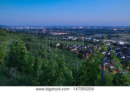 Scenic view of vineyards and the