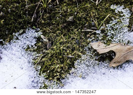 Green moss frosted over in the winter