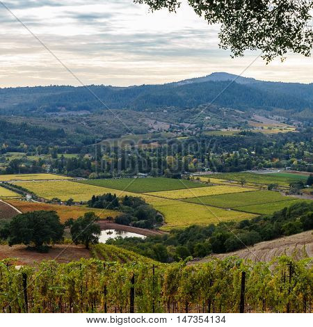 Vista of Sonoma Valley patchwork vineyard in autumn before sunset. Sonoma California wine country, with patches of yellow, green, orange vines at harvest time. Mountains in background.