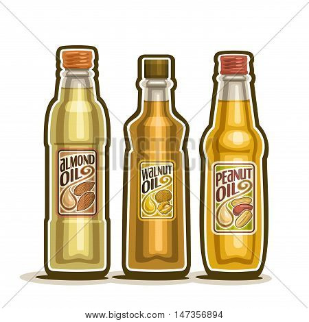 Vector logo 3 glass Bottle with pure Almond Oil, bottles virgin cooking Walnut oil, container natural organic peanut oils and goober nut oily liquid with cap and label, closeup isolated on white.