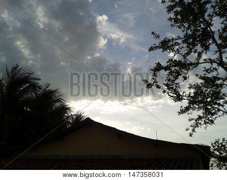 Árvore em primeiro plano tendo ao fundo o reflexo solar