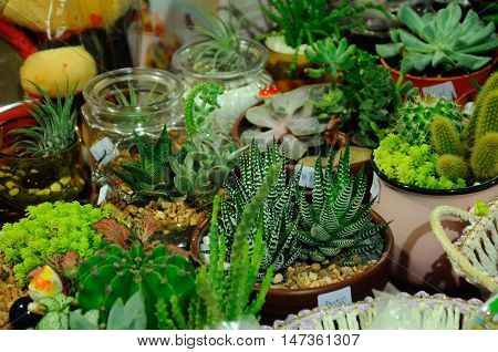 SERDANG, MALAYSIA -JULY 30, 2016: Terrarium hobby. Small trees planted in a small glass jar.