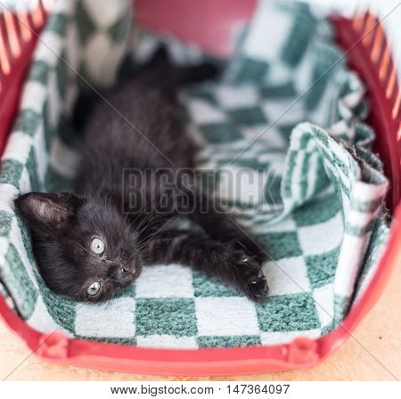 The little black cute kitten lies on a bed