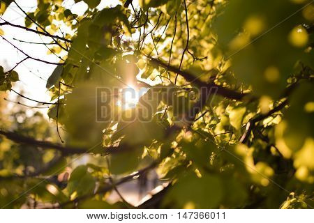 Nature background Photo sheet at sunset close up in warm colours macro bokeh Close up Leaf Backlit Silhouette Sun rays light between branches Empty space for inscription or other objects.