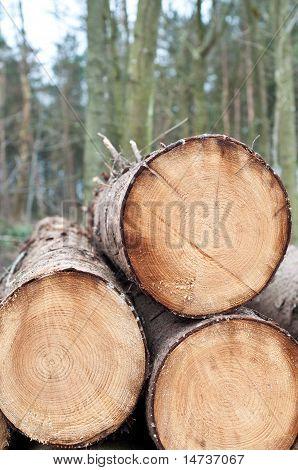 Deforestation - Stack Of Trunks