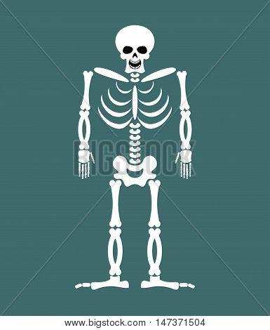 Skeleton On White Background. Skull And Bones. Dead Isolated