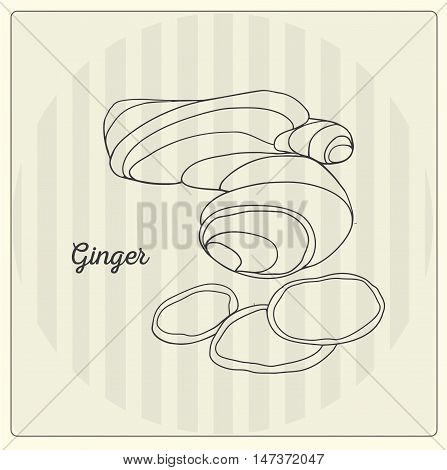 Ginger. Vector black line illustration. Sketch, doodle.
